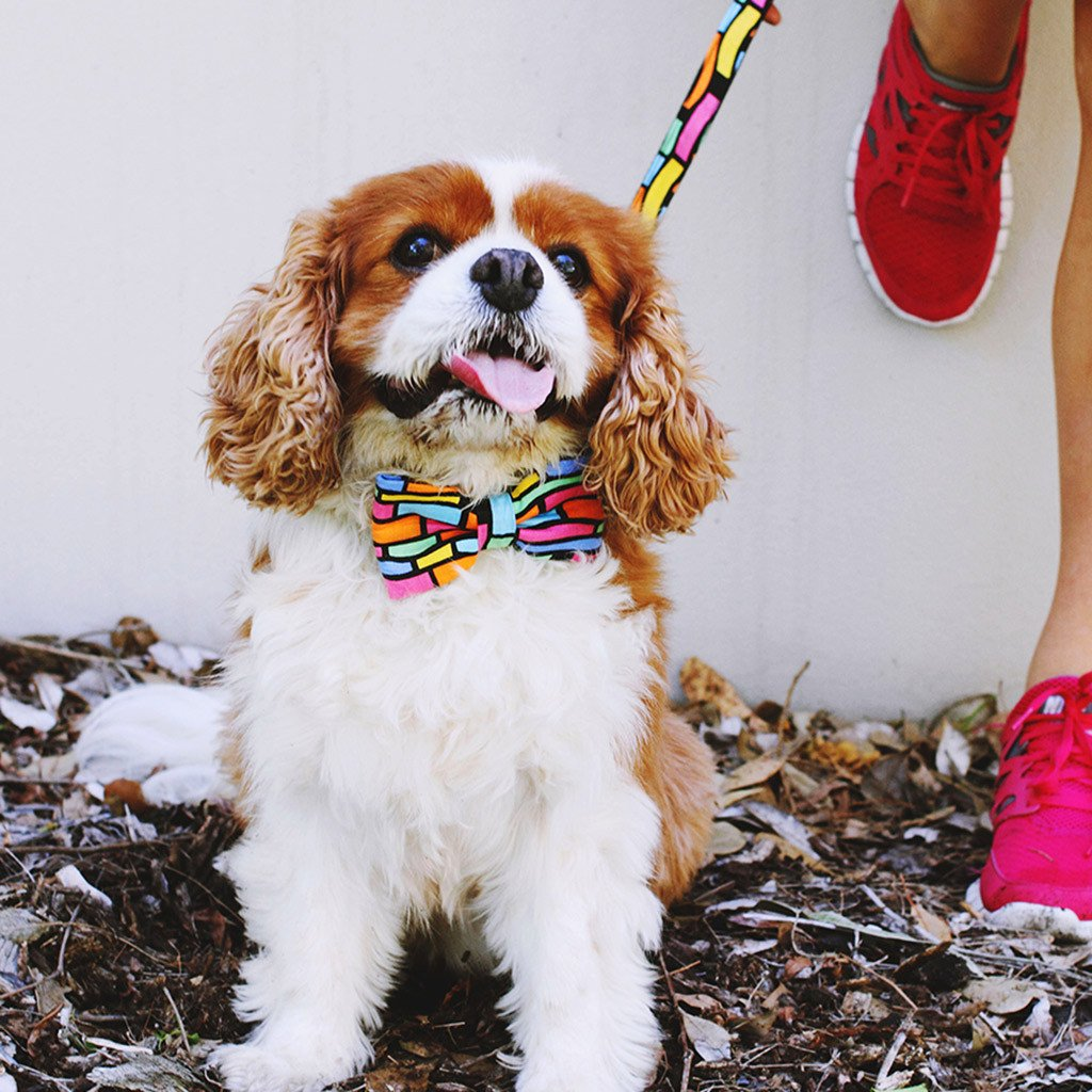 Dog Bow Tie and Collar Set : Crazy Neon