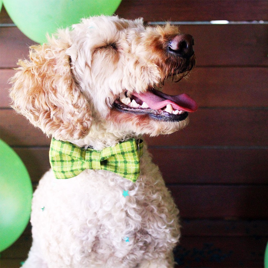 Dog Collar, Bow tie and Leash Set : Green Squares - Dharf - 2