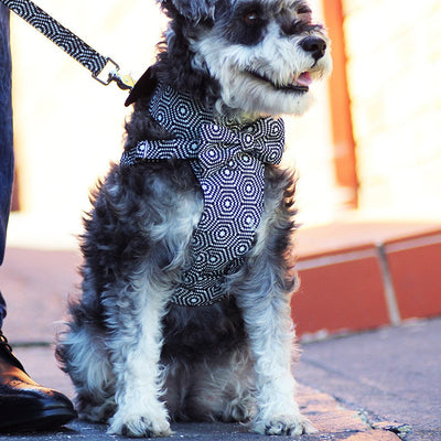 Dog Bow-tie Harness - Black & White Hexagon - Dharf - 3