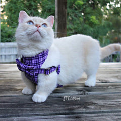 Cat Bow-tie Harness & Leash : Purple Criss-Cross