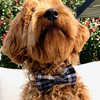 NEW Dog Bow Tie and Collar Set: Classic Plaids Navy