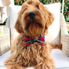 NEW Dog Bow Tie and Collar Set: House Of Wales Tartan