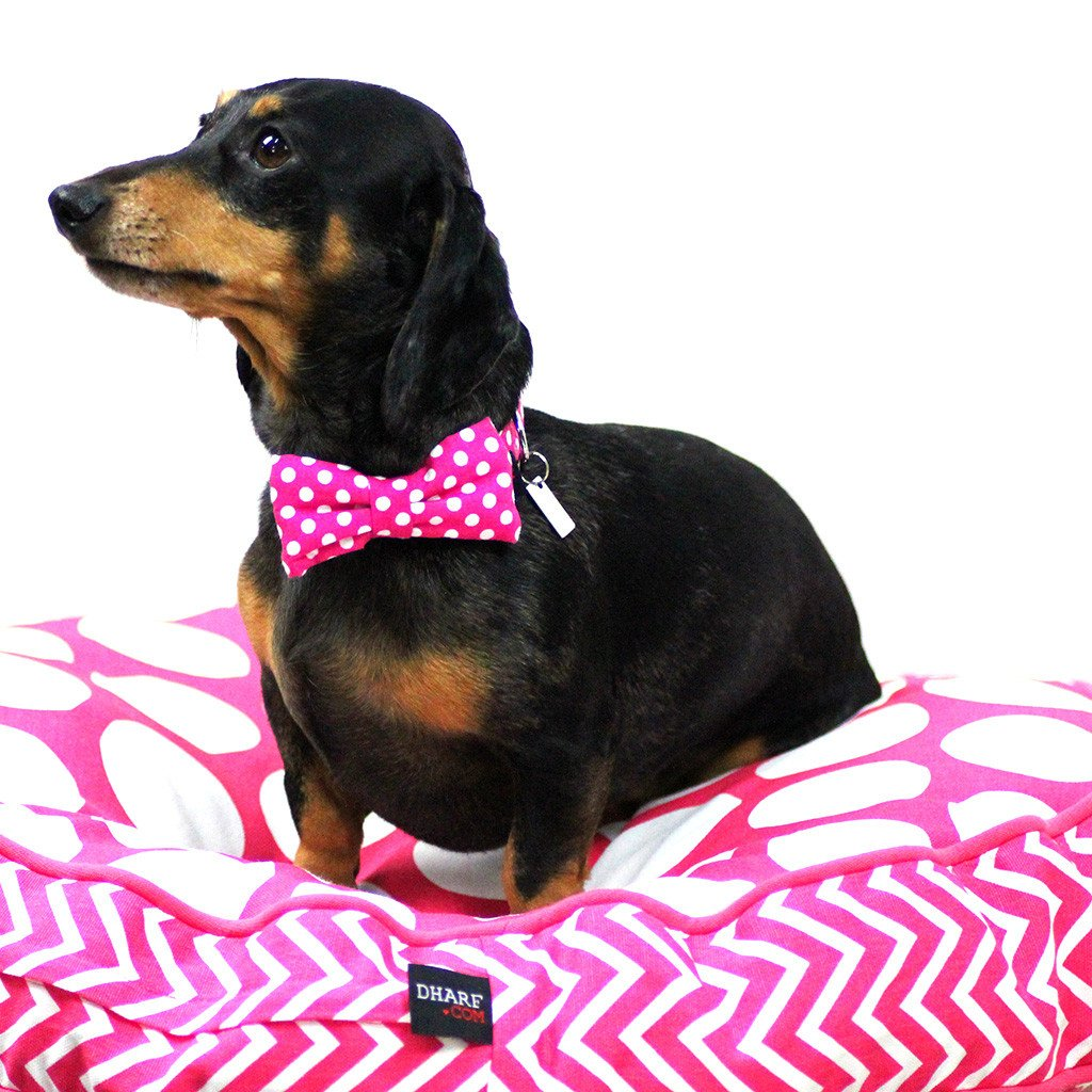 Dog Collar, Bow tie and Leash Set : Fuchsia Polka - Dharf - 2
