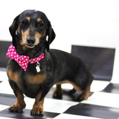 Dharf dog bow tie and removable collar in fuchsia polka