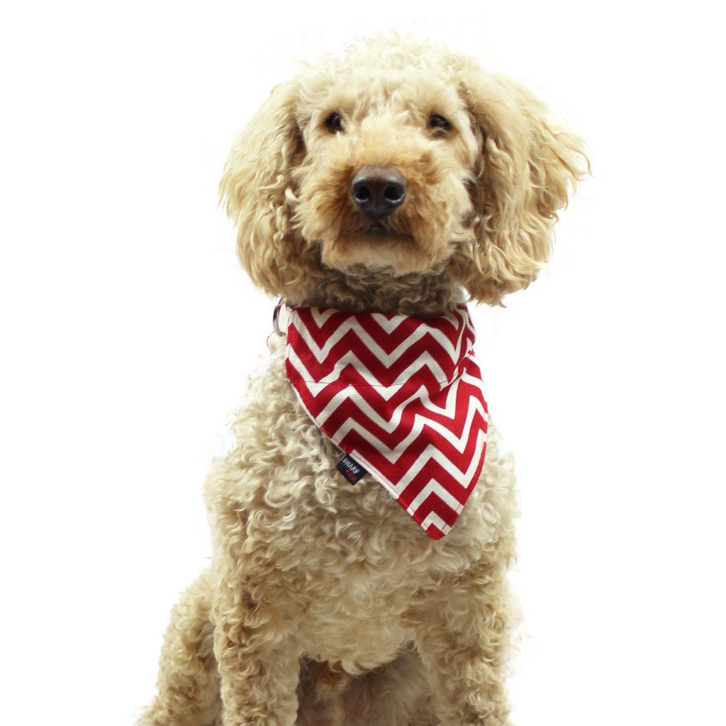 Dog Bandana and Collar : Red Chevron - Dharf - 2