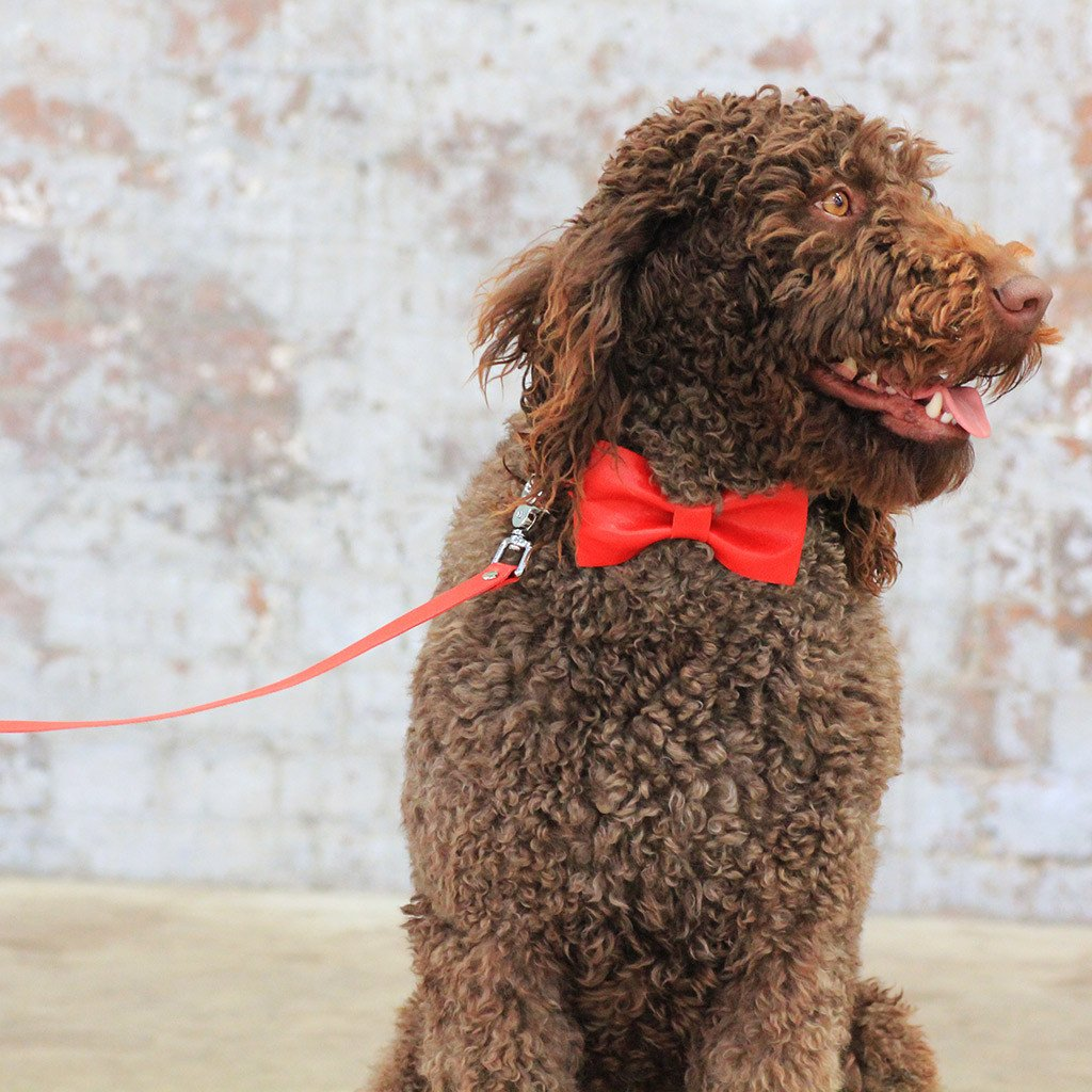 Leather Dog Collar, Bow tie and Leash Set: Red - Dharf - 4