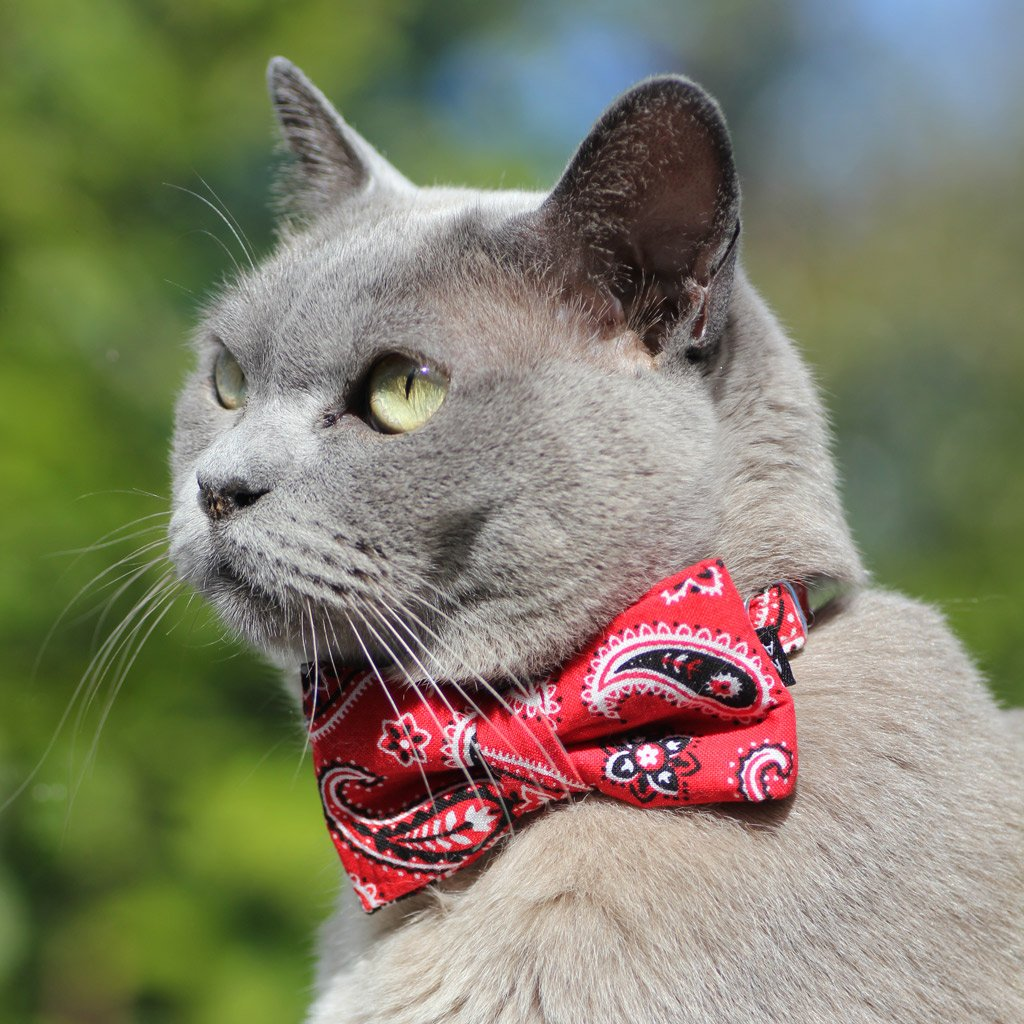 Cat Collar and Bow Tie : Red Paisley