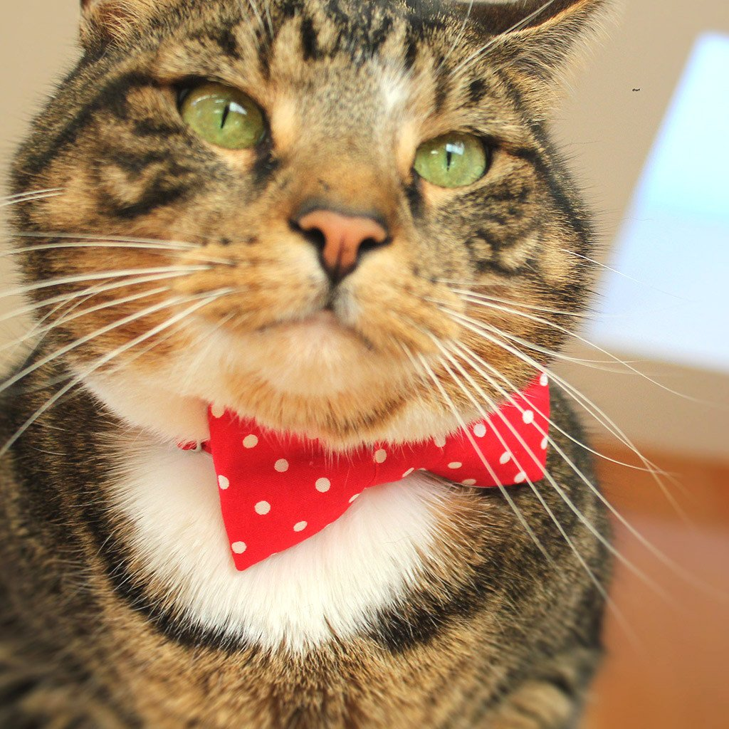 Cat Collar and Bow Tie : Red Polka Dot - Dharf - 2