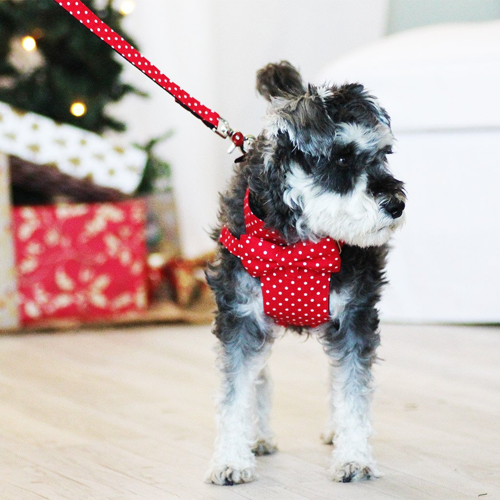 Dog Bow-tie Harness & Leash : Red Polka - Dharf - 2