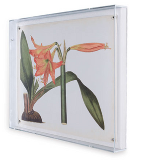 "Amaryllis Art IV in Lucite Frame 20"" x 26"""