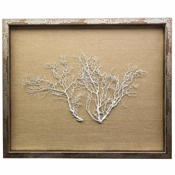 Jamie Dietrich Sea Fan Framed Graphic Art
