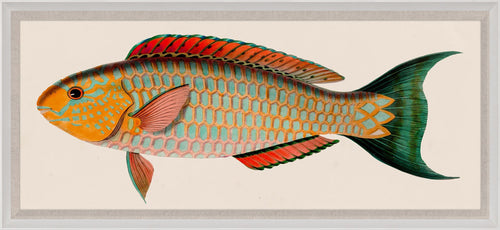 Natural Curiosities Bennet Fish 1, Art
