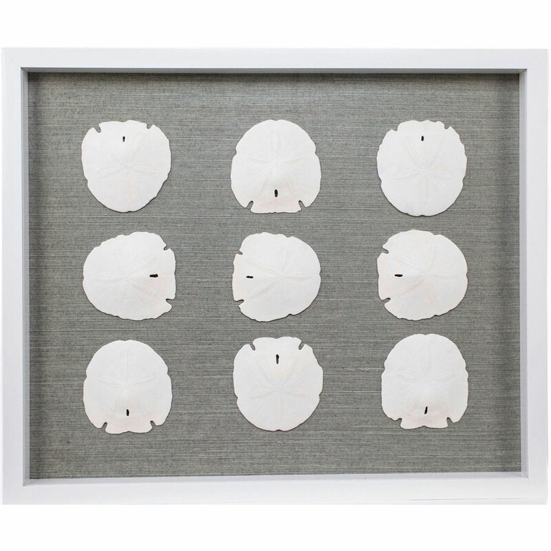 Sand Dollars Framed Graphic Art Print in Silver By Jamie Dietrich