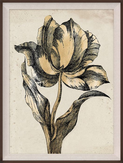 Sieger Tulips 2 Art by Natural Curiosities