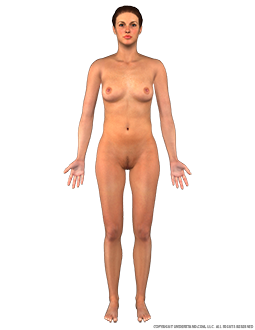 Body Female Anterior Image