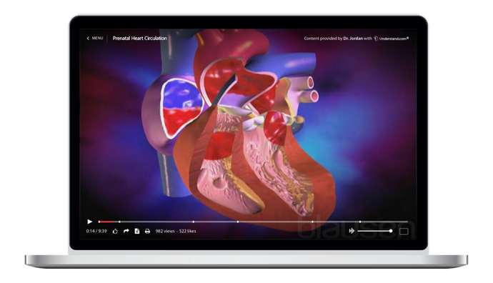 Prenatal Heart Circulation Animation