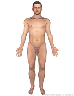 Body Male Anterior Image