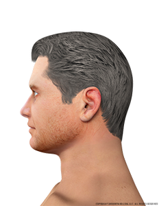face-male-left-lateral
