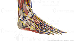 Foot and Ankle Complete Image
