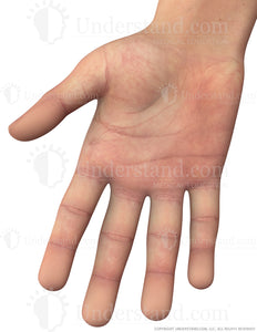 Hand Male Right Palmar Image