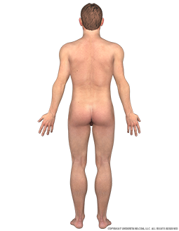 Body Male Posterior Image