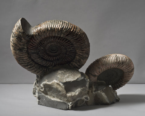 An Ammonite Pair