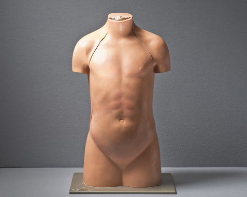 An Anatomical Torso Model, circa 1950
