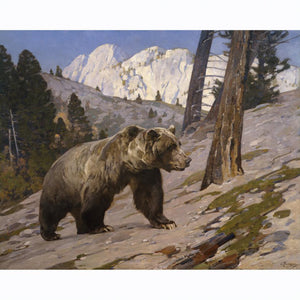 PR 101  SILVER TIP GRIZZLY BEAR