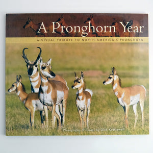A Pronghorn Year: A Visual Tribute to North America's Pronghorn by Dick Kettlewell