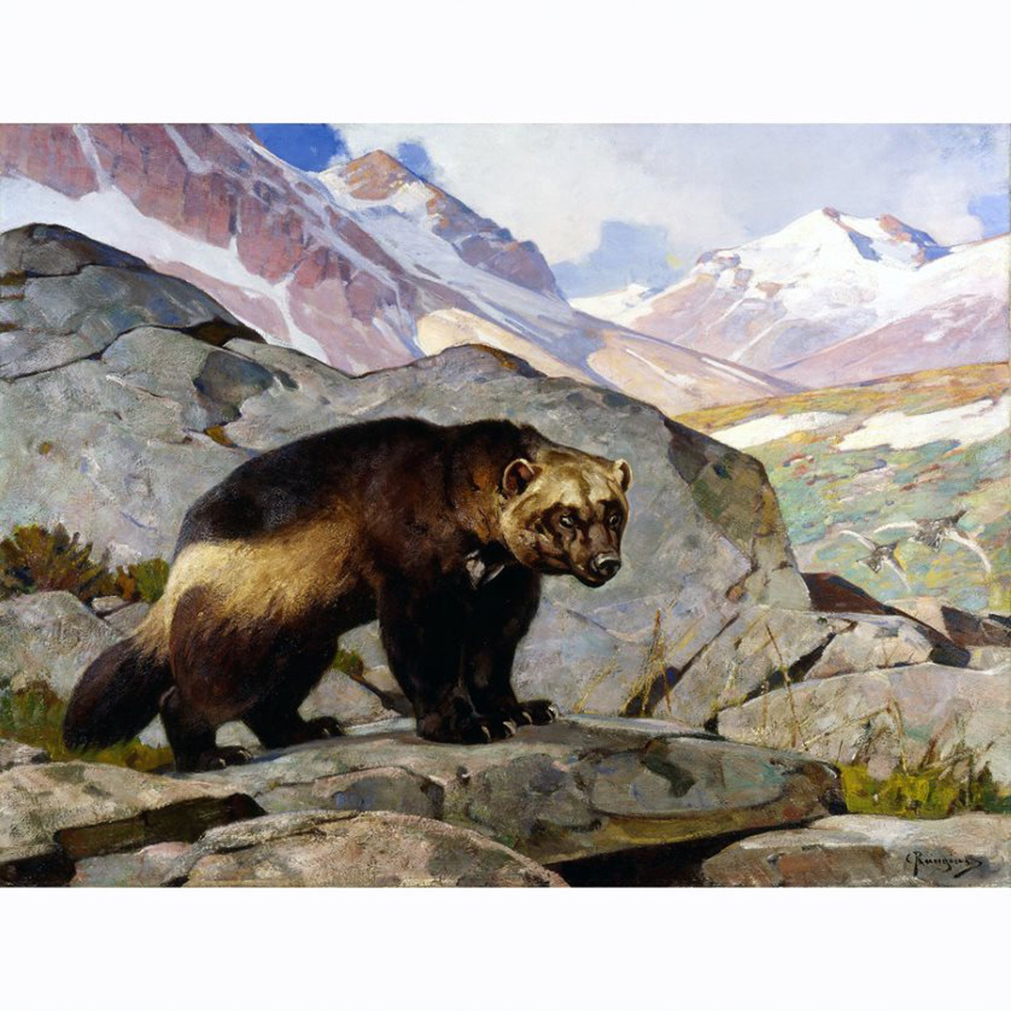 Wolverine in a Rocky Mountain Landscape by Carl Rungius