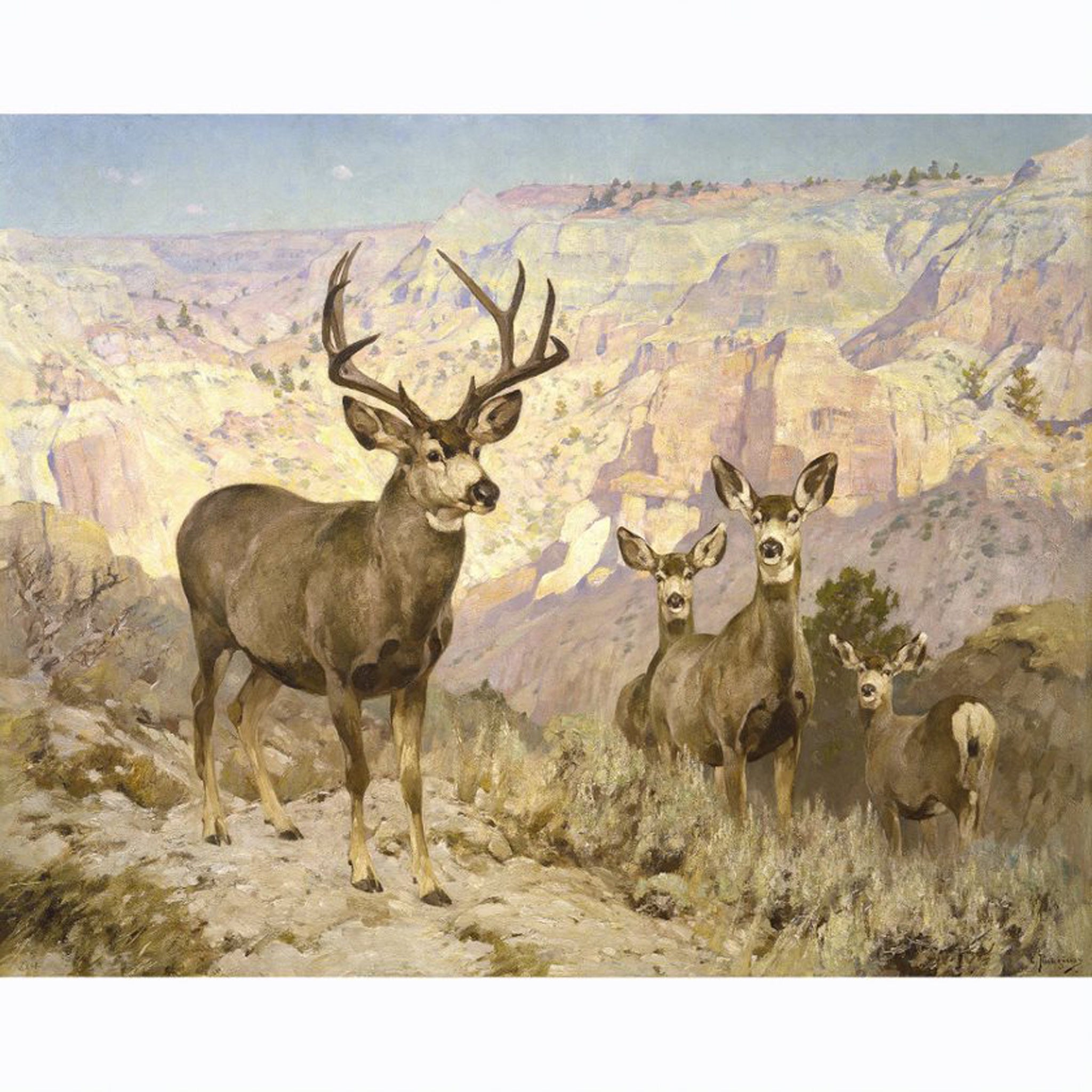 Mule Deer in the Bad Lands by Carl Rungius