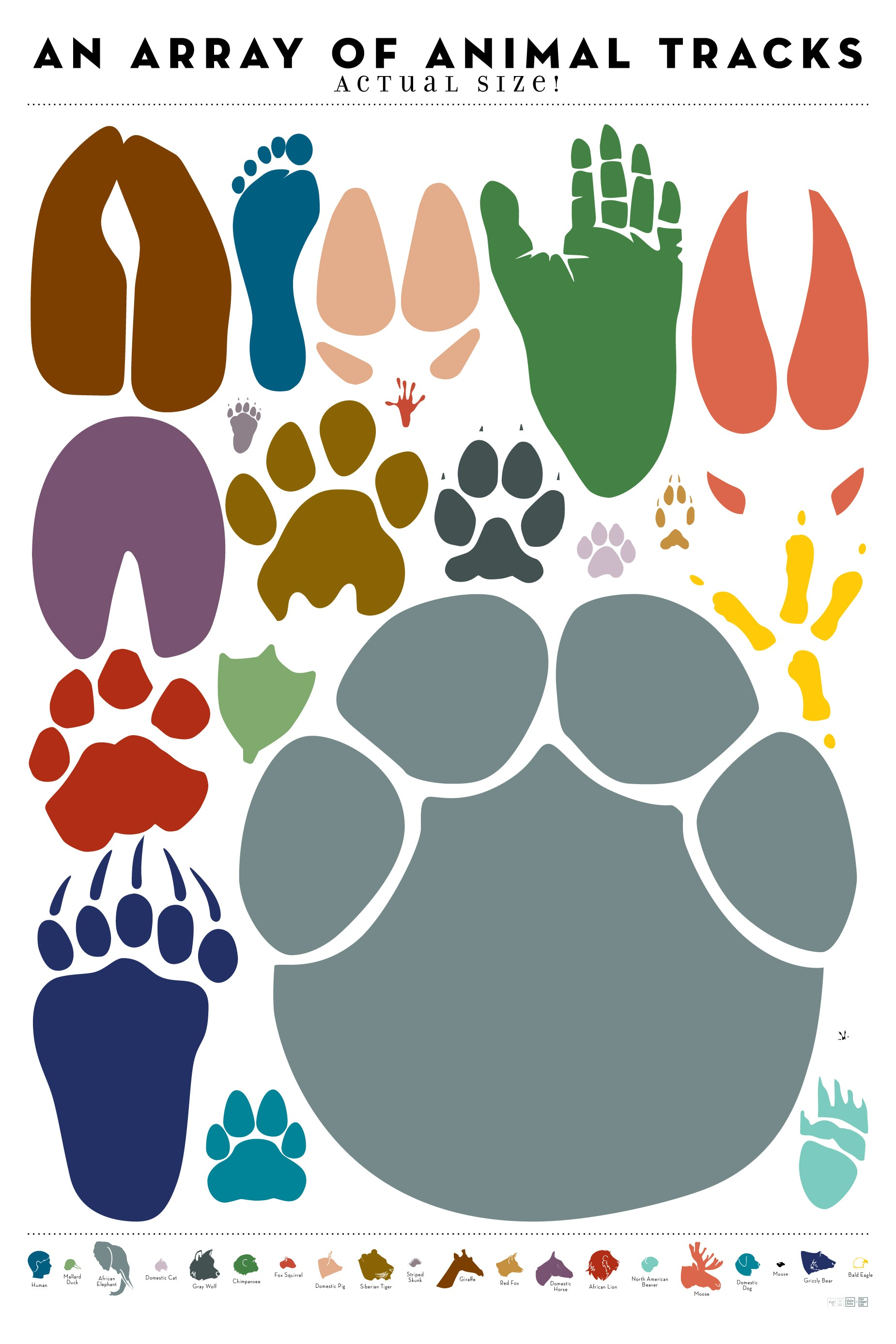 Pop Chart Lab | Design + Data = Delight | An Array of Animal Tracks ...