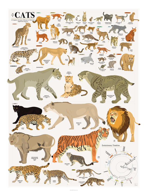 products/P2-Cats-ImgA.png
