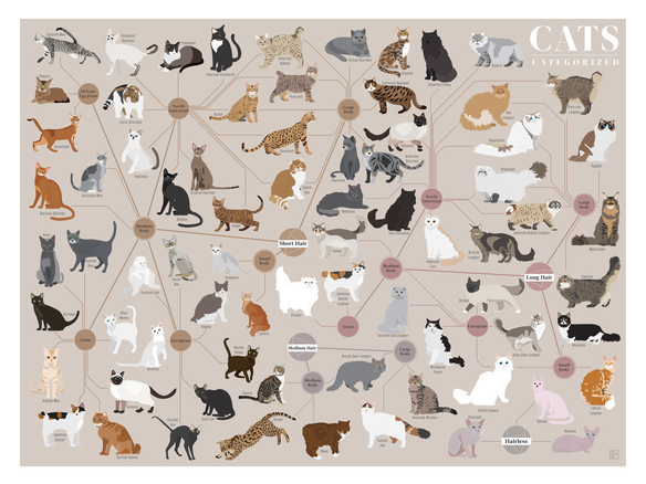 Cats, Categorized