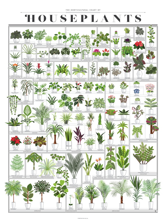 products/P2-Houseplants_ImgA.png