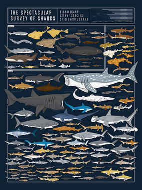 The Spectacular Survey of Sharks