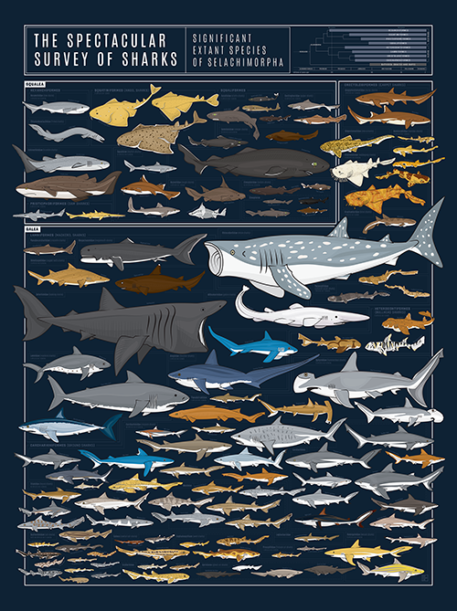 products/P2-Sharks_ImgA_71e1b293-a0f5-4f1f-b036-740fb39423c4.png