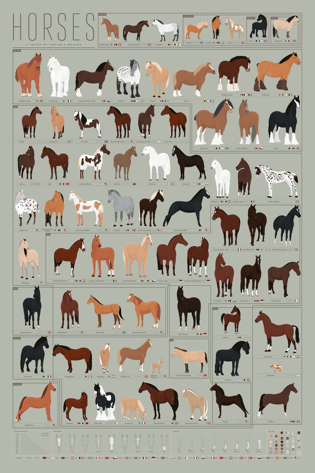 Horses A Chart Of Notable Breeds Pop Chart