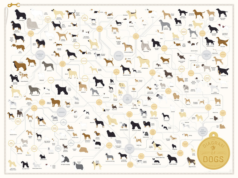 products/PopChartLab_The_DiagramofDogs_SI.jpg
