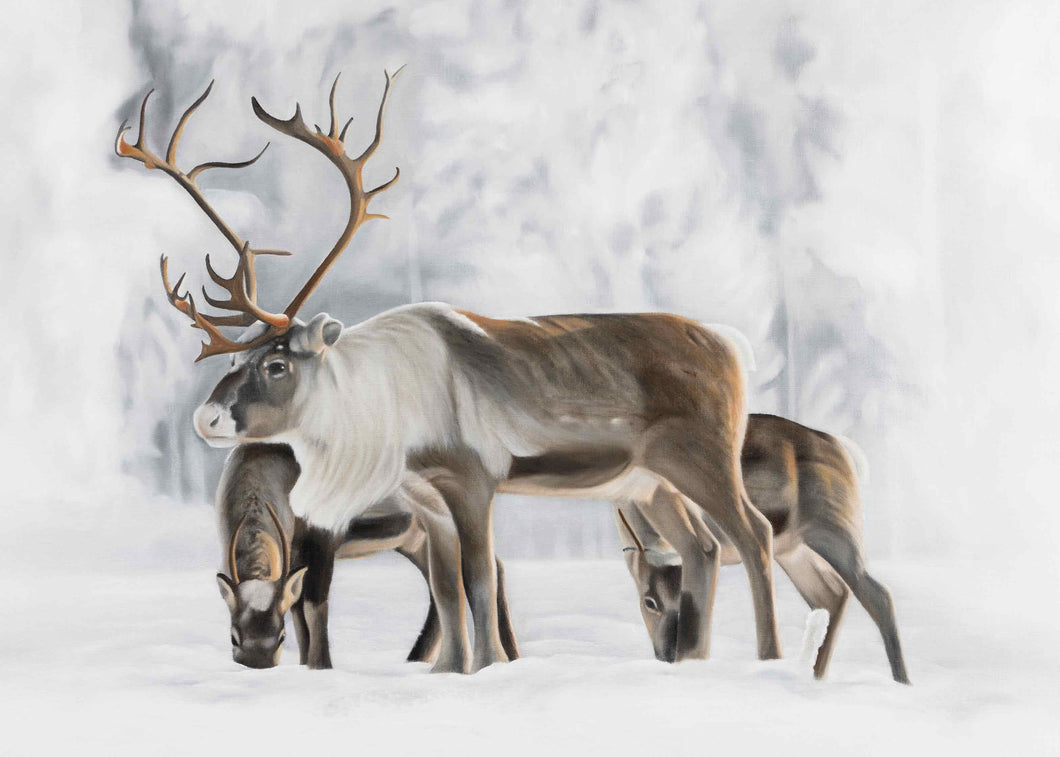 Reindeer Winter