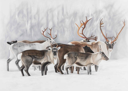 Winter Reindeer herd