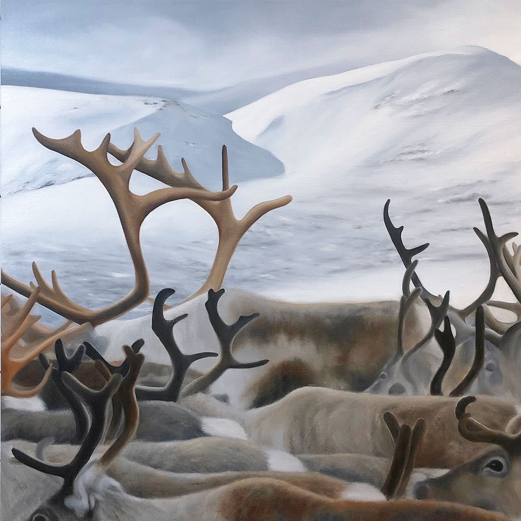 Olja/ Mountain Reindeers I