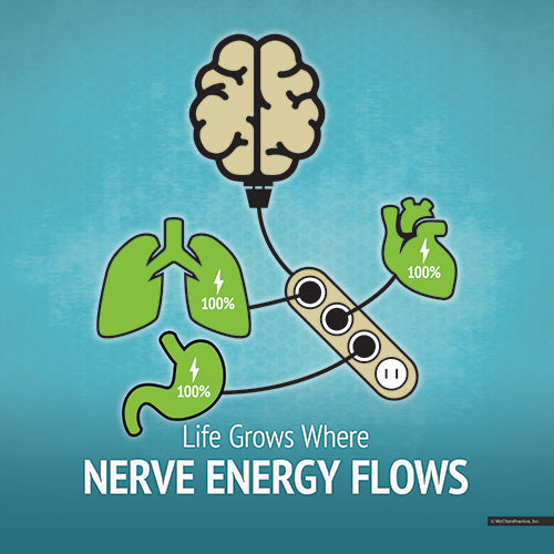 Nerve Energy Flows