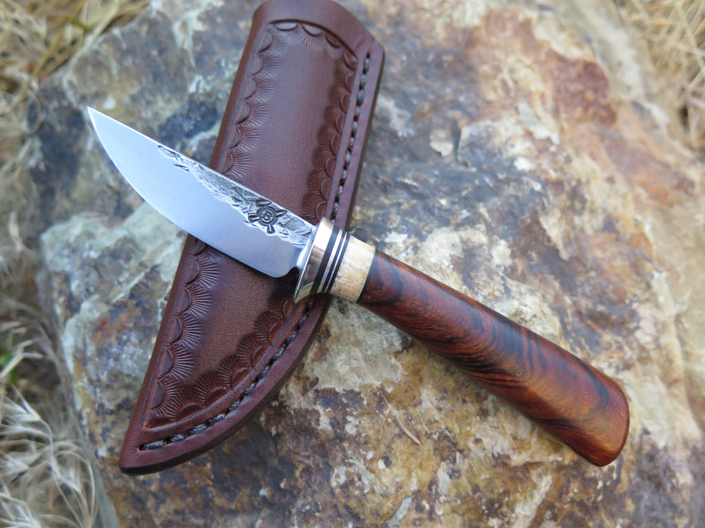 Desert Ironwood and Fossil Walrus Pocket