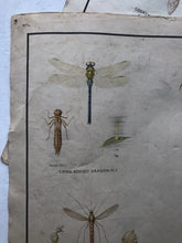 Load image into Gallery viewer, Vintage Pond Insect Poster