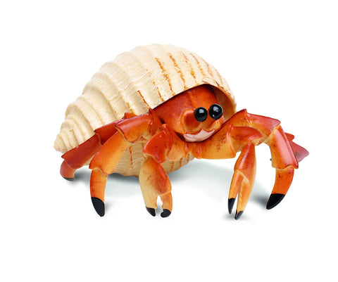 Incredible Creatures | Hermit Crab
