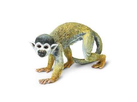 Incredible Creatures | Squirrel Monkey
