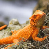 Incredible Creatures | Bearded Dragon