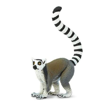 Wildlife | Ring-tailed Lemur