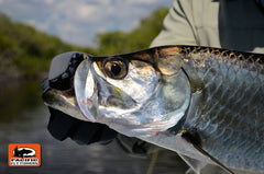 Campeche, Mexico Tarpon Fly Fishing